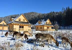 Domki Wypoczynkowe Romanówka