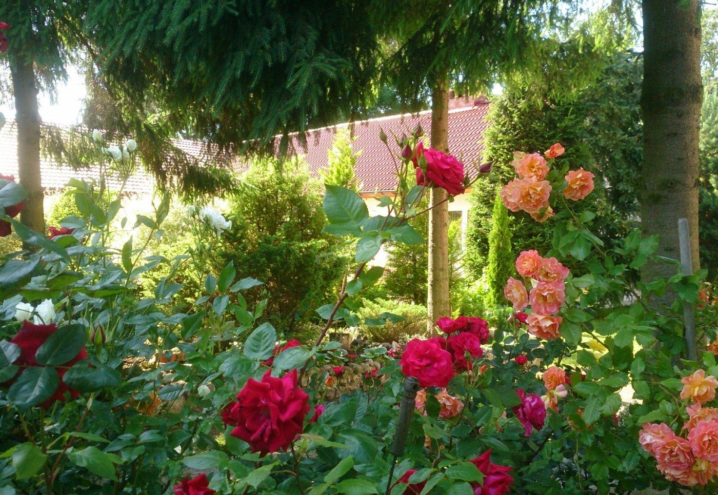 Guest House Pod Różą