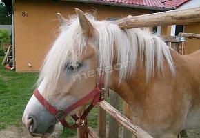 Agroturystyka Agro-horse