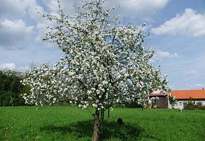 Agroturystyka Arkadia