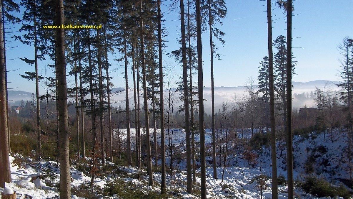 Zimowy widok z lasu na zalew
