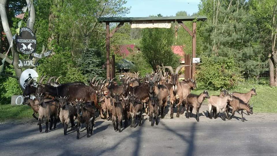 brama wjazdowa do naszego gospodarstwa ekoagroturystycznego  Przedbieszczady w Dolinie Wisłoka