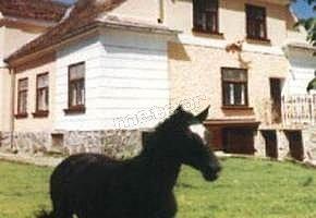 Agroturystyka Klub Jeździecki Lange