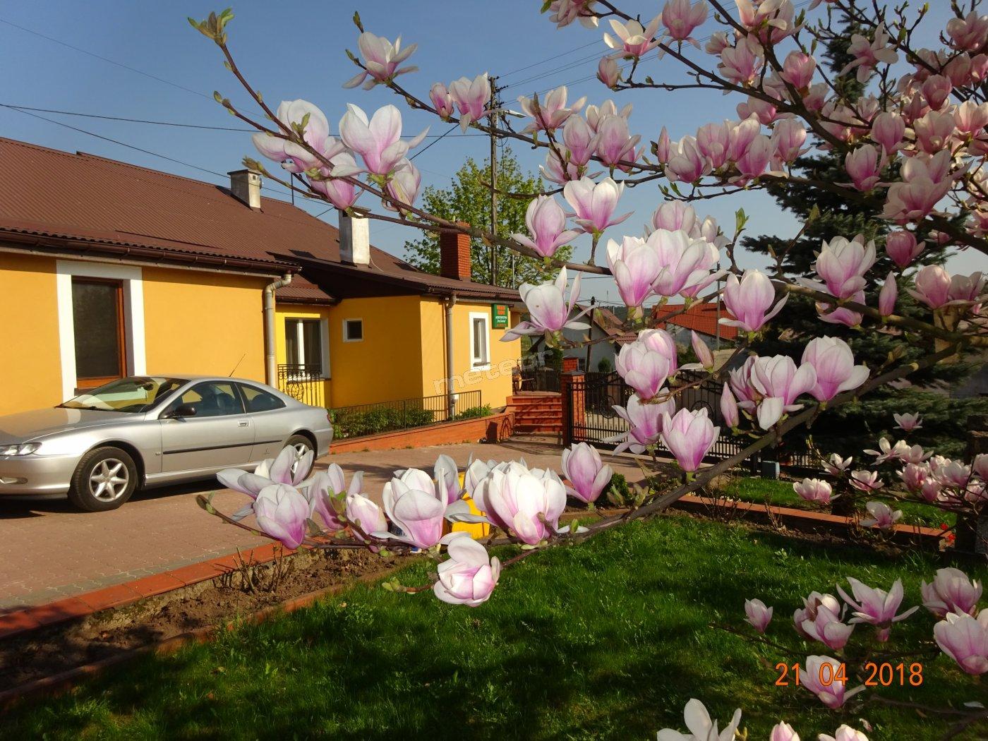 kwiaty od wiosny do jesieni