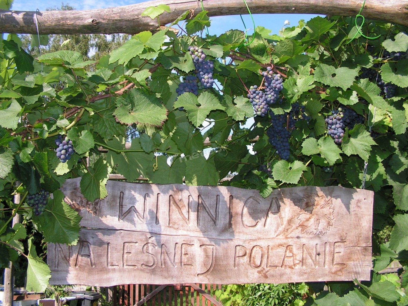 Winnica Na Leśnej Polanie