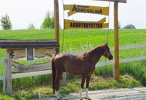Agroturystyka Adrenalina