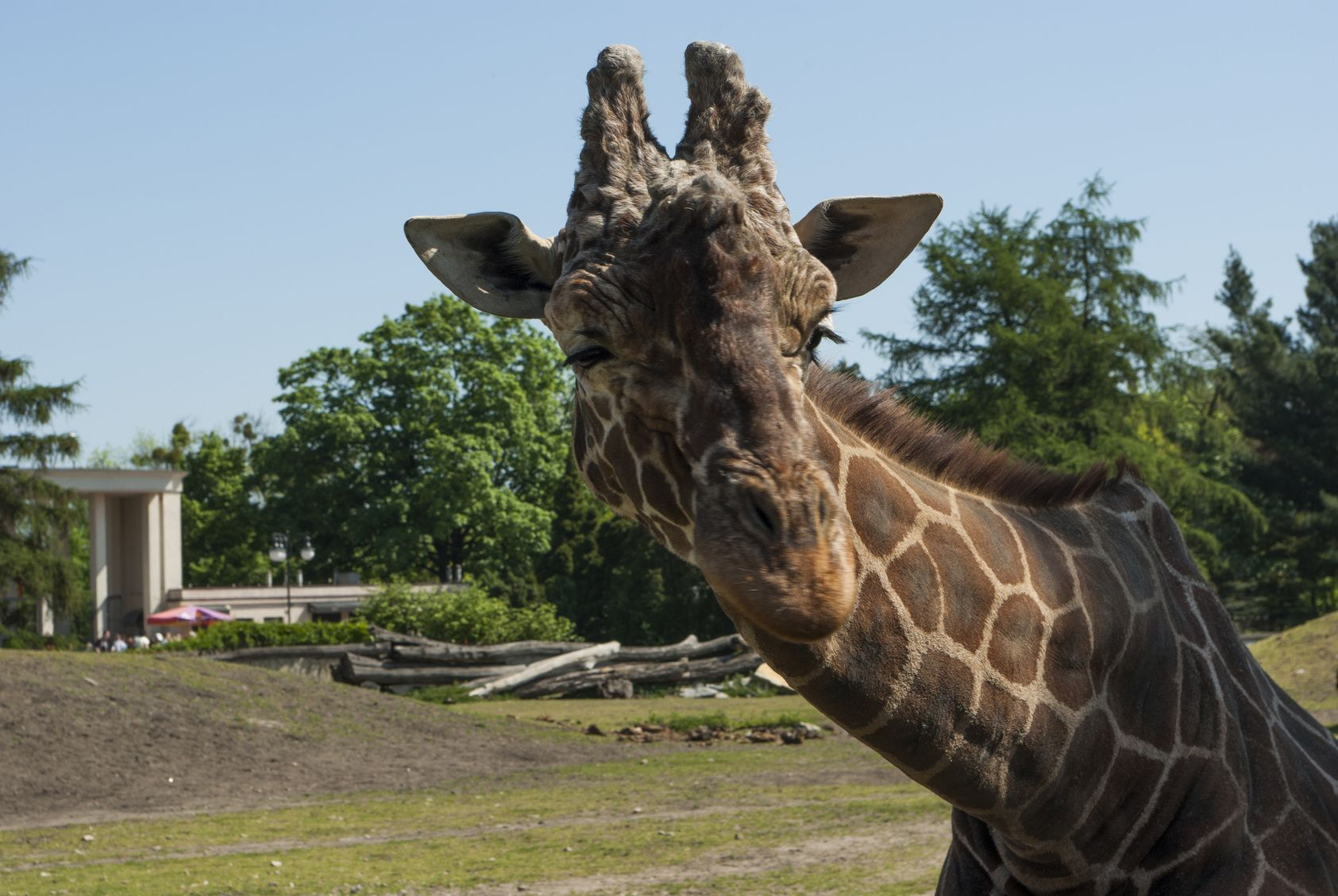 12 Najlepszych Noclegów W Okolicy Ogrudu Zooloficznego We